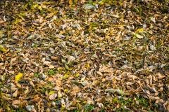 Withered autumn leaves. Stock Photography