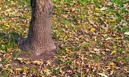 Withered autumn leaves. Royalty Free Stock Images