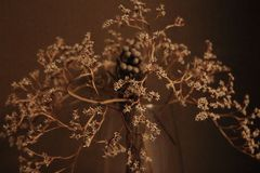 Withered bouquet with small dry flowers ans branches in glass vase against beige wall close up. Withering and fading concept. Vintage retro mood background Royalty Free Stock Photo