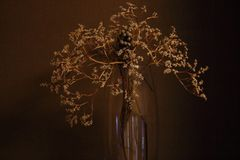 Withered bouquet with small dry flowers ans branches in glass vase against beige wall. Withering concept. Vintage mood background Stock Images