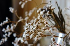 Withered bouquet with small white dry flowers and branches against beige wall close up. Withering and fading concept. Vintage retro mood background Stock Photography