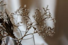 Withered bouquet with small white dry flowers and branches in glass vase against beige wall close up. Withering and fading concept. Vintage retro mood Royalty Free Stock Photography