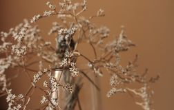 Withered bouquet with small white dry flowers and branches in glass vase against beige wall close up. Withering and fading concept. Vintage retro mood Stock Image