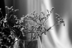 Withered bouquet with small white dry flowers and branches in glass vase black and white close up. Royalty Free Stock Photography