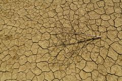 The withered branch lies on the cracked earth from the heat. Stock Photography