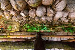 Withered coconuts on the wall, top view. Sanya Li and Miao Villa Royalty Free Stock Images