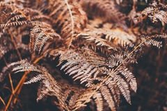 Withered Fern Plant during Daytime Stock Photos