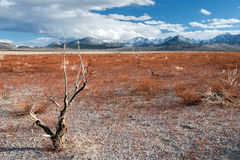 Withered field with background of Sierra Nevada mountains Royalty Free Stock Photo