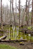 Withered flooded forests are often found in Tierra Stock Photos
