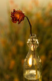 Withered Flower in the bottle Stock Photo