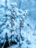 Withered Flower With Ice Particle at Daytime stock photo