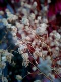 Withered flower, but no less beautiful stock photography