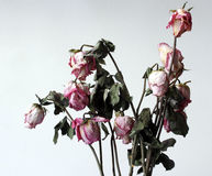 Withered flowers. Withered, atrophy, in the grey environment royalty free stock photo