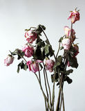 Withered flowers. Withered, atrophy, in the grey environment royalty free stock images