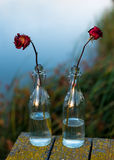 Withered flowers in the bottle Royalty Free Stock Images