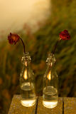 Withered flowers in the bottle Stock Images