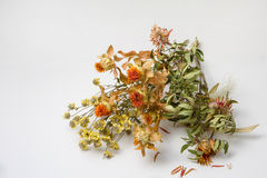 Withered flowers Stock Photos