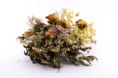 Withered flowers bouquet on a white background Royalty Free Stock Image