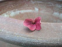 Withered flowers on clay bath. royalty free stock photography