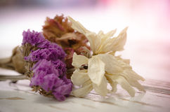 Withered flowers Royalty Free Stock Images
