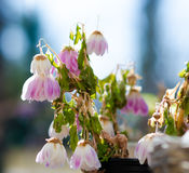 Withered flowers. On a spring day Royalty Free Stock Images