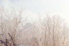 Withered grass covered with frost on background of cloudy sky Royalty Free Stock Images