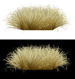 Withered grass on an isolated background. The image of a lawn of grass on an isolated background Stock Image