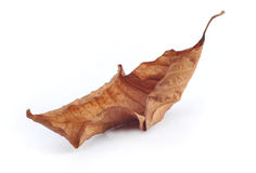 Withered leaf Stock Photography