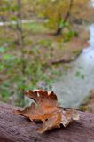 Withered leaf on a bridge. A withered leaf from a plane tree on a bridge during autumn Royalty Free Stock Photo