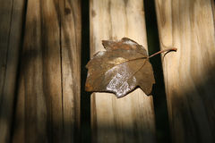 Withered Leaf on Brown Wooden Desk Royalty Free Stock Images