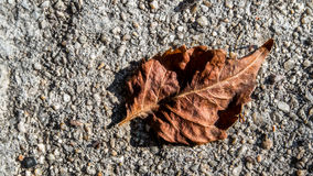 Withered leaf Stock Photos