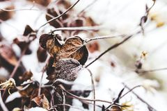 Withered Leaves stock photography