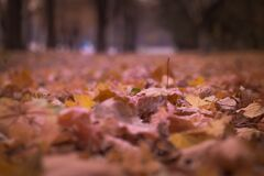 Withered Leaves on Floor Focus Photography Stock Photography