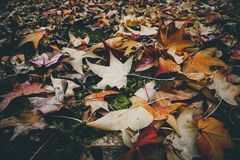 Withered Leaves on the Ground Royalty Free Stock Photo