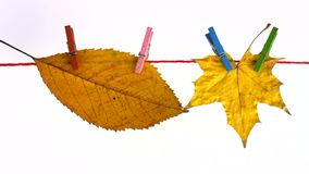 Withered leaves hanging on clothesline Royalty Free Stock Image