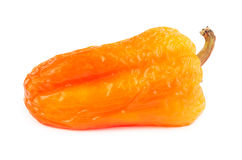 Withered orange bell pepper isolated Stock Image
