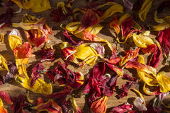 Withered petals in sunlight Stock Photography