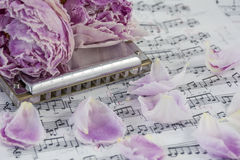Withered pink peonies with harmonica are on the musical notes Stock Photography