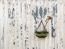 Withered Plant on Corrugated Grunge Wall. Stock Photo