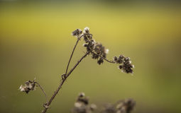 Withered plant Stock Image