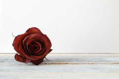 Withered red rose flower on a white wooden shelf.  Royalty Free Stock Photo