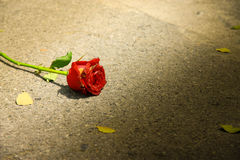 A withered red rose. Was left on the street, alone stock photo