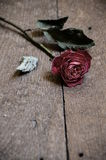Withered red rose on wooden floor Stock Photo