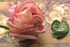 Withered rose. And leaf on decorated surface Stock Photos