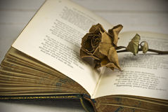 Withered rose on book. Vintage poetry book with dead rose; lying on table against countryside background Stock Photos