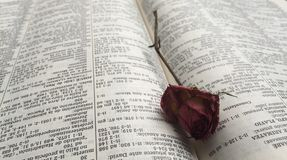 Withered rose in a book. A withered rose taken from a vase at my home and placed in a book Stock Photo