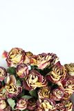 Withered rose bouquet Stock Photos