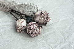 Withered rose. Bouquet of three dry roses on old paper Stock Image
