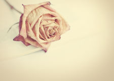 Withered rose. Fading rose. Dead rose. Withered rose Stock Image