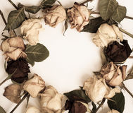 Withered rose. Frame on white Stock Photography